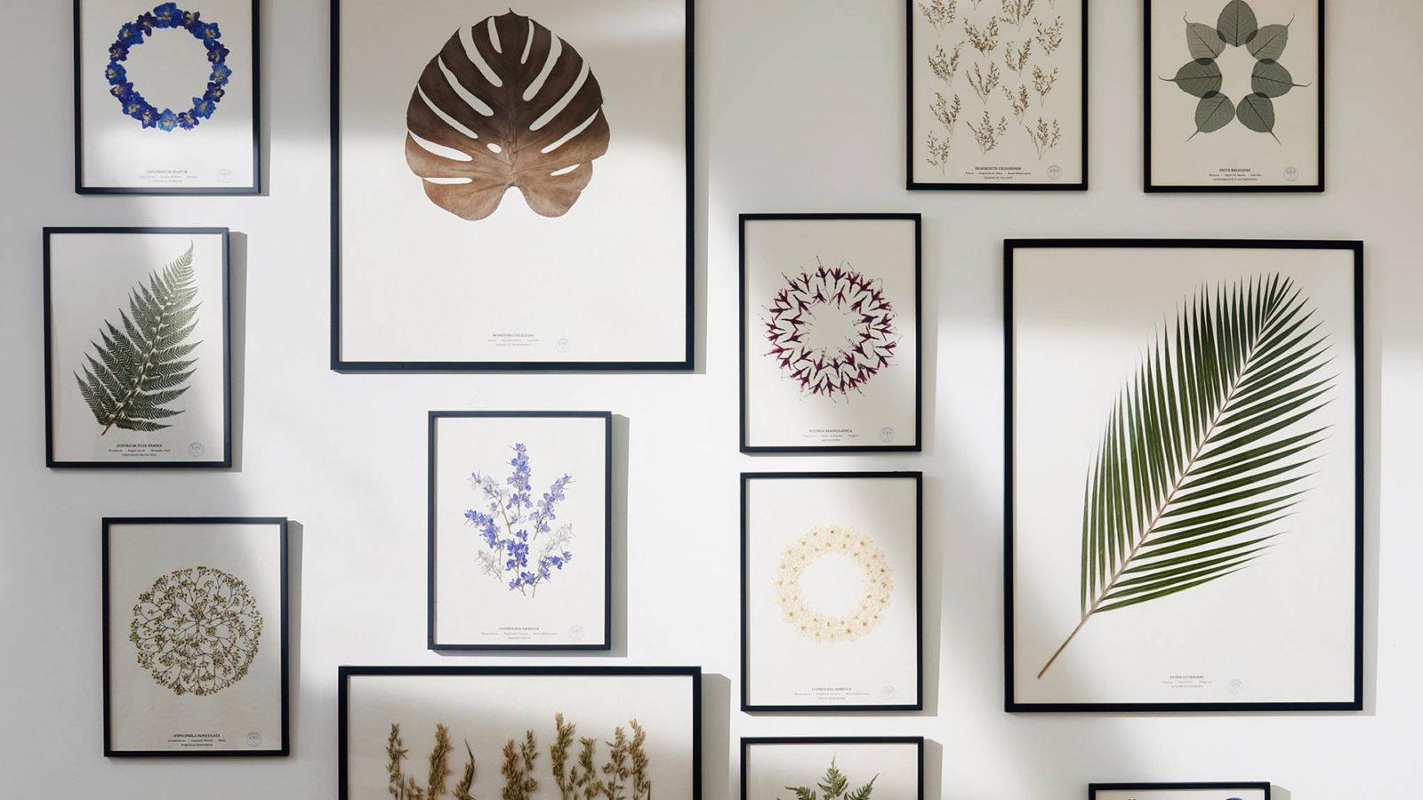 herbarium-ouv