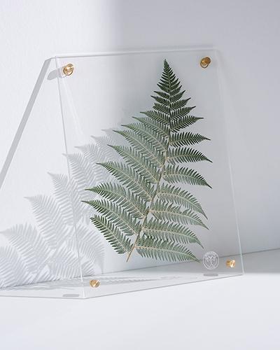 herbarium4